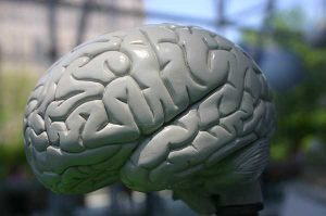 Disability Tax Credit Eligibility for Epileptic Canadians